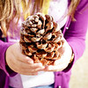 Giant Pinecone from the Umbrella Pines