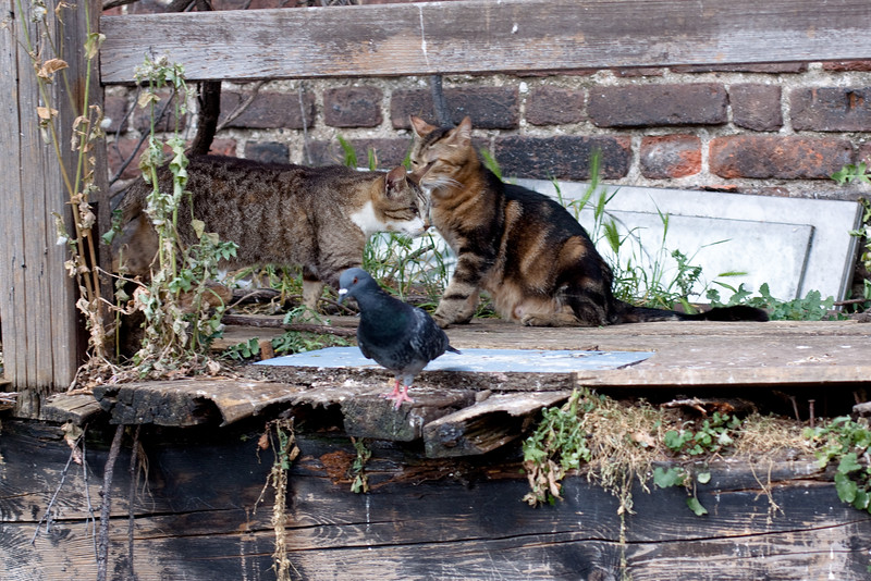cats and dove