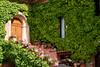 A wooden door and ivy