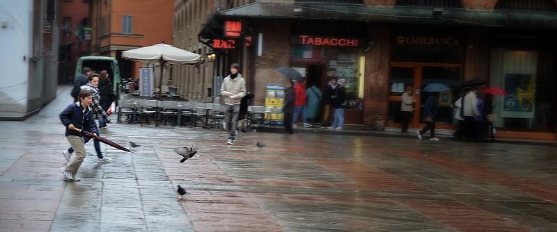 Piccione, Bologna, Italy