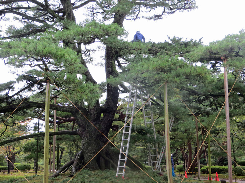 Kenroku-en Garden Maintenance