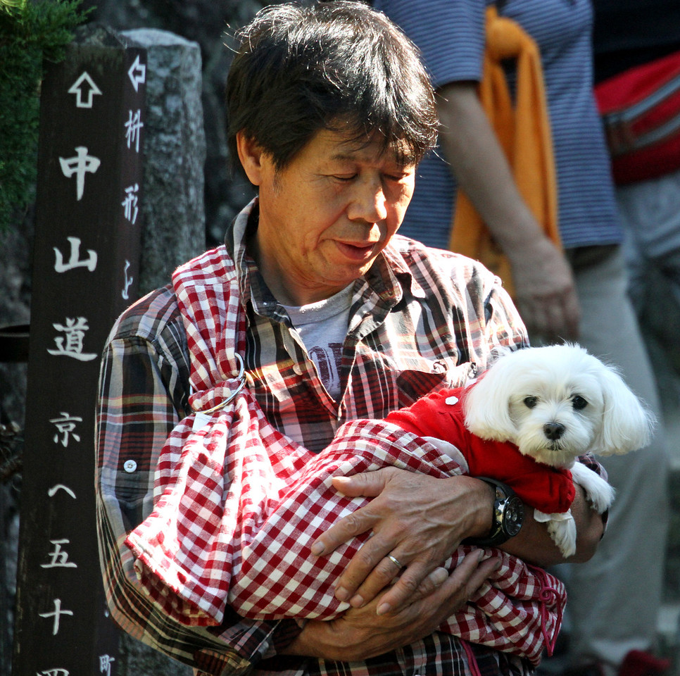 Miyagawa Morning Market - Free ride for dogs at the Market