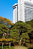 Japanese autumn park and skyscraper