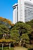 Japanese autumn park and skyscraper