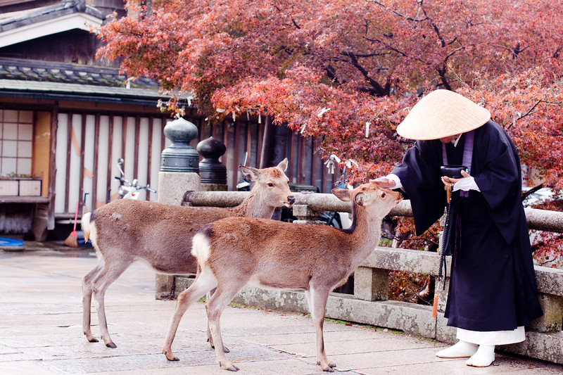 Buddhist monk and two deers
