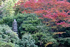 Japanese autumn tress and a monument