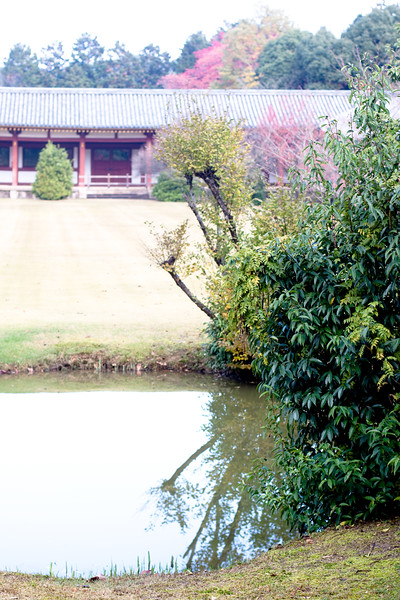 Japanese autumn park