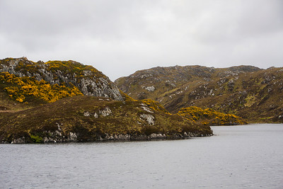 Gorse and Hillsides