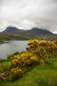 Gorse and Highland Mountains