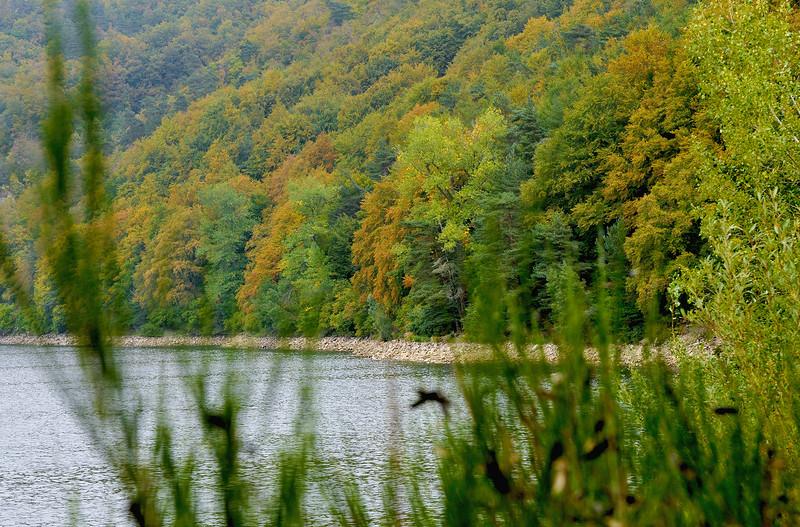 lac2009_2.98