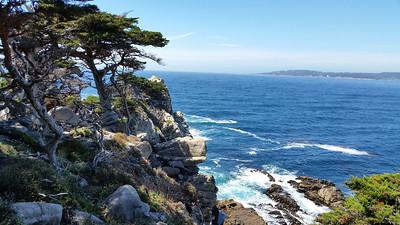 Allan Memorial Cypress Grove, Point Lobos State Reserve
