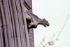Gargoyle, on a London church (1)