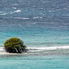 Lonely Shubbery on Aruba breakwater