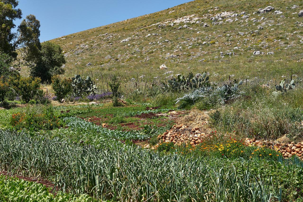 Farm Golan Heights