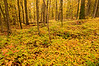 TRMI-10014: Forest floor in the Porkies
