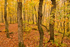 TRMI-10031: Porcupine Mountains State Park in fall
