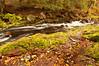TRMI-10020: Little Carp Creek in late September