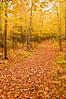 TRMI-10039: Hiking trail through the Porkies
