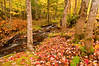 TRMI-10018: Little Carp Creek in fall