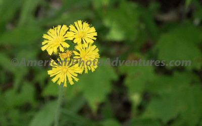 Skok Meadow_20150605_004