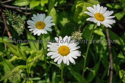Skok Meadow_20150605_010