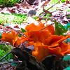 Mushrooms that look like flowers