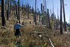 Hiking through the burned forest
