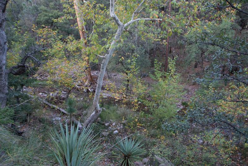Creek flowing along Herb Martyr trail