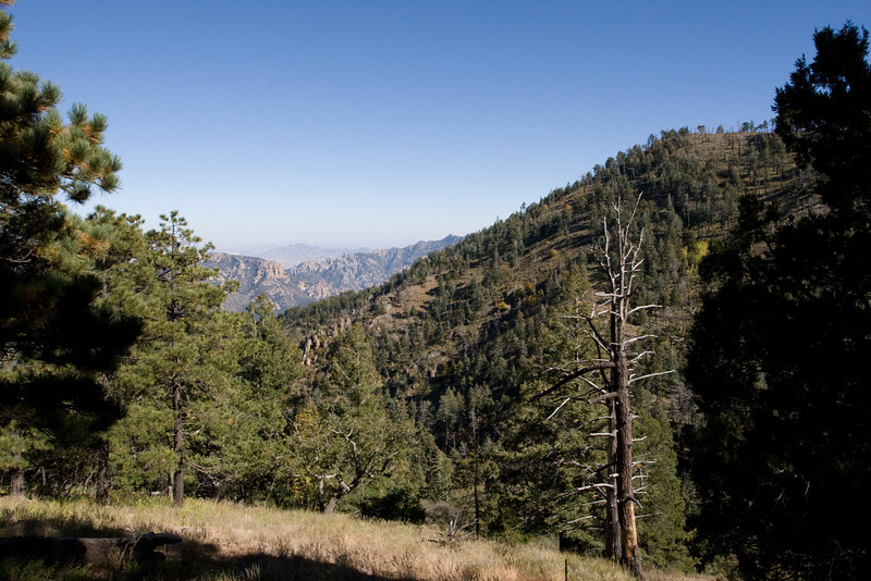 High elevation pasture