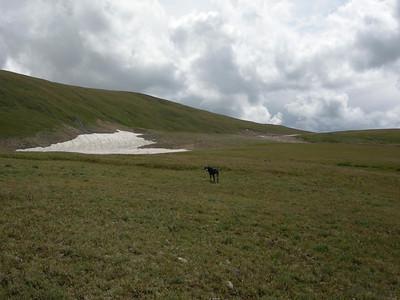 goatmeadow (18)