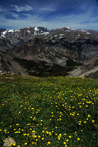 Wildflowers and the Beartooth Mountains.