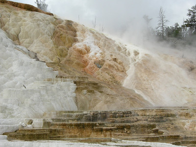 Palette Spring, Mammoth Hot Springs, Yellowstone National Park