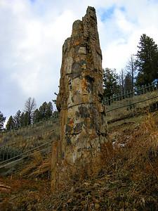 Petrified Tree, Yellowstone National Park