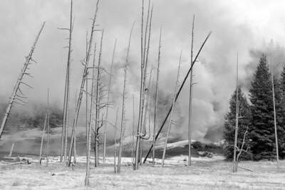 Black Growler Steam Vent, Norris Geyser Basin