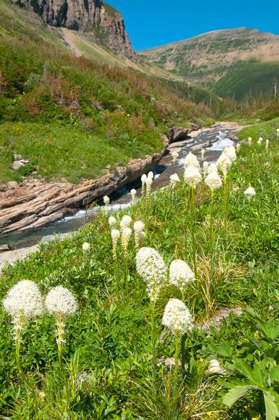 TRMT-12187: Beargrass at Pegas trailhead