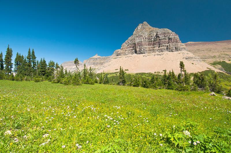 TRMT-12050: Mountain wild flowers in Glacier National Park