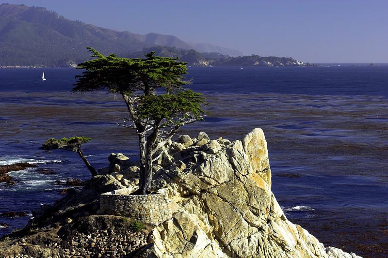 Tree3771_20X30