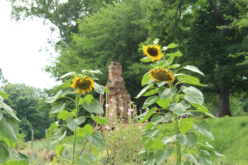 View from the garden -- Nailery chimney