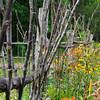 Gilmore Cabin  garden