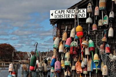 Cape Neddick Lobster Pound