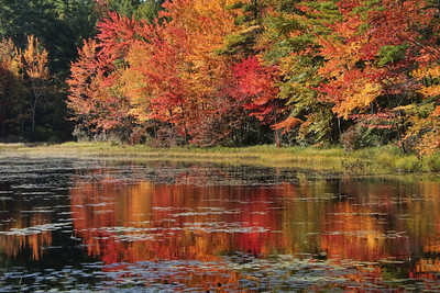 Fall Foliage Reflections
