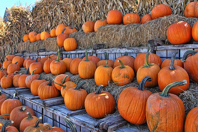 A Lot of Pumpkins!
