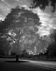 Tree6317