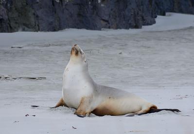 Zeeleeuw ligt te zonnebaden of te mediteren. (Jolanda)