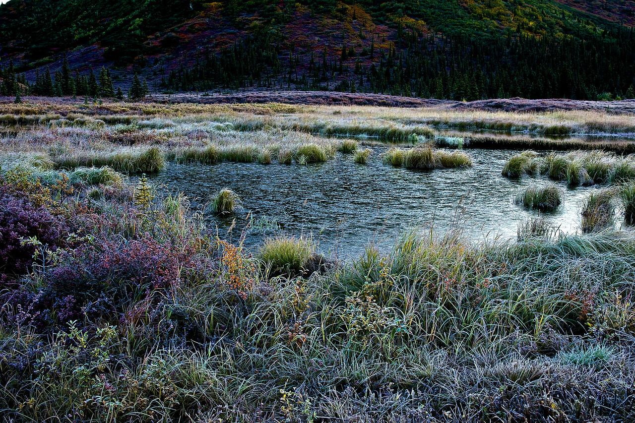 Tundra and Frosty Pond