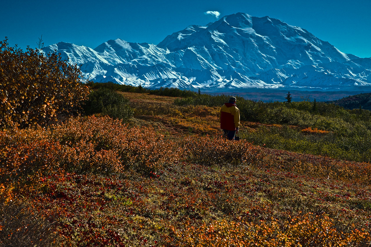 Afternoon View of Denali