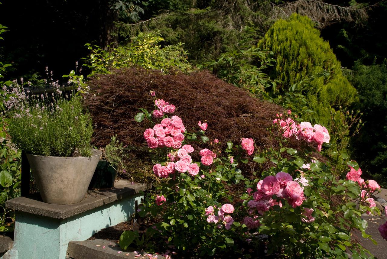 Vancouver Island Milner gardens Qaulcum