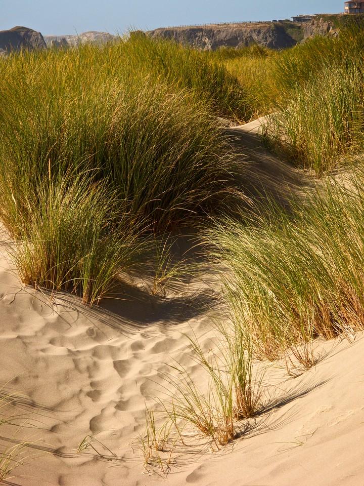 Dune - Bandon OR
