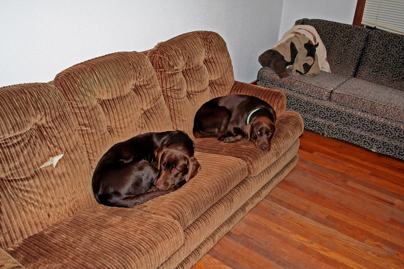 Tired dogs at the house
