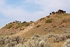 MWH-12023: Teddy Roosevelt Wild Horses
